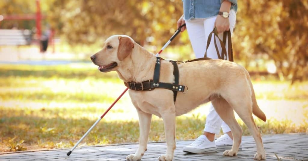 Trabajos divertidos con animales: adiestrador de perros con ojo que ve