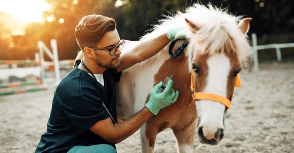 Trabajos divertidos con animales: veterinario