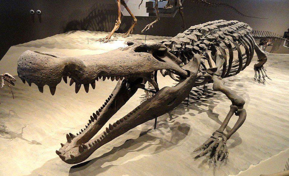 Los cocodrilos más grandes de todos los tiempos Deinosuchus