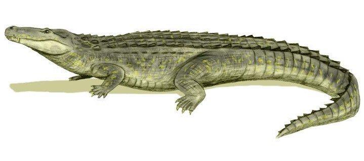 Los cocodrilos más grandes de la historia Purussaurus brasilensis