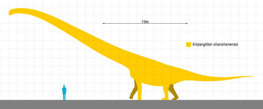 Los dinosaurios más grandes de la historia: Xinjiangtitan shanshanesis