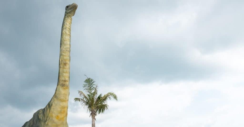 Los dinosaurios más grandes de la historia: Supersaurus vivianae