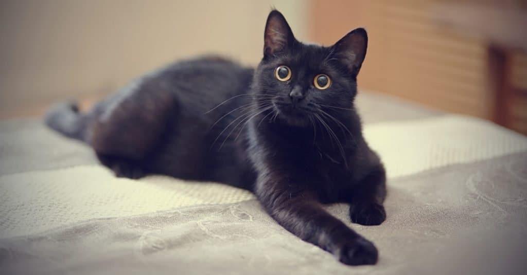 El gato más viejo de todos