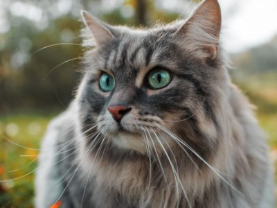 A The Top 10 Oldest Cats Ever!
