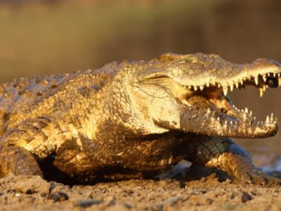 A Top 10 Scariest Animals in The World