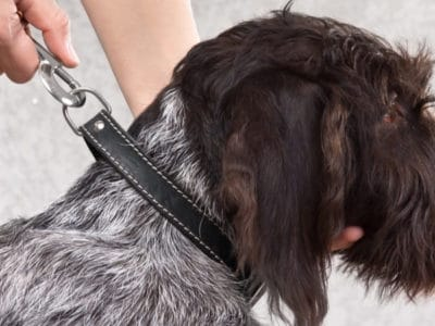 A The Top 3 Picks for Best Bark Collar: Reviewed for 2021