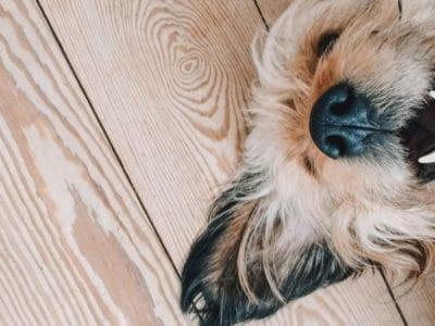 A The Top 4 Picks for Best Dog Toothpaste: Reviewed for 2021
