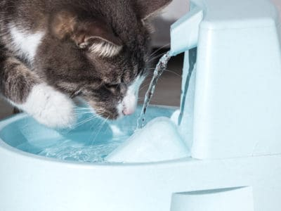 A The 4 Best Cat Water Fountains: Reviewed for 2021