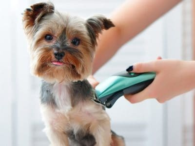 A Best Dog Clippers: Reviewed for 2021