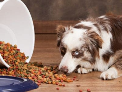 A Best Dog Food Container: Reviewed for 2021