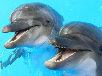 A Top 10 Happiest Animals on Earth