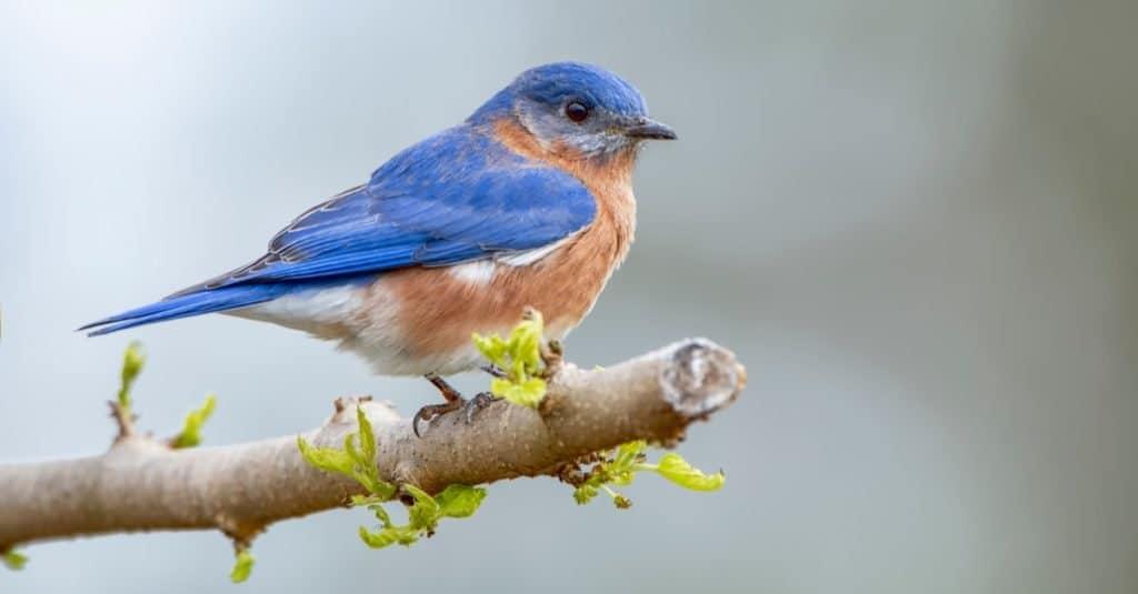 Los animales más felices: Bluebird