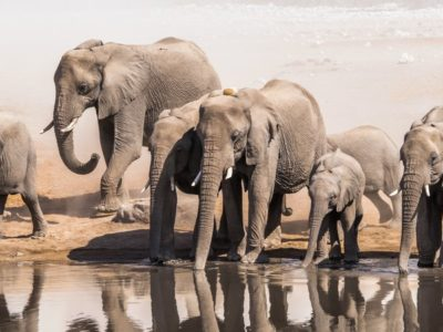 A The 8 Tallest Animals in the World
