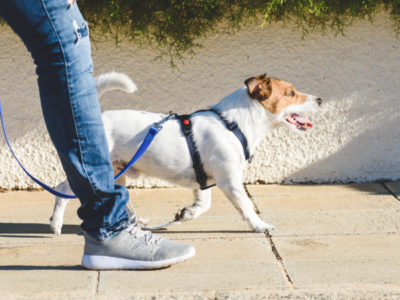 A Best Dog Harness: Reviewed for 2021