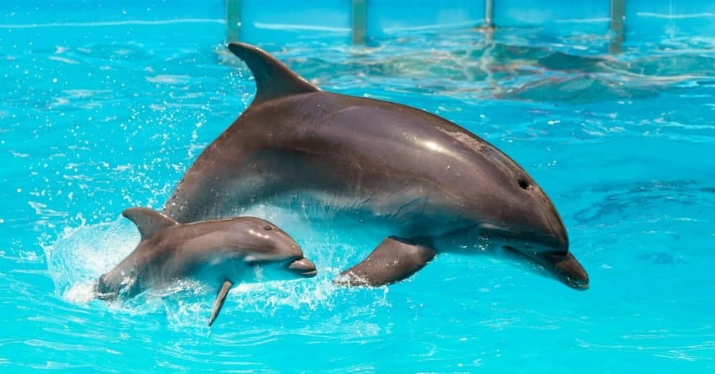 Animal Facts: Dolphins