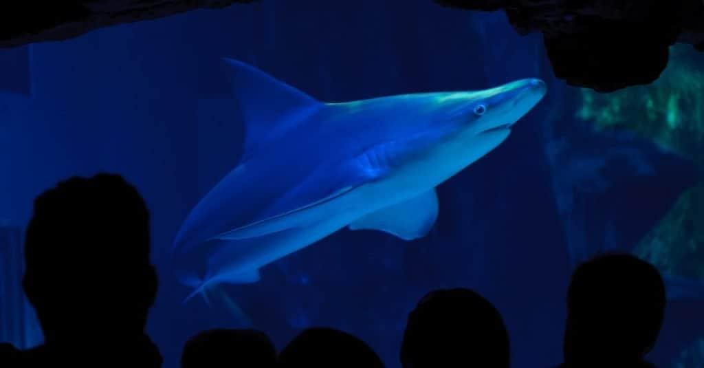 Animal Facts: Sharks