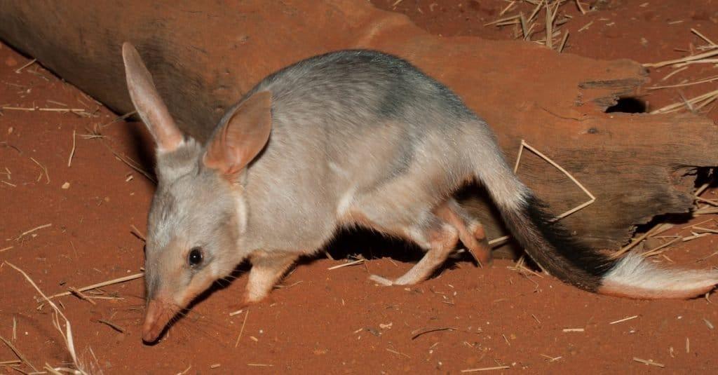 地下洞穴的9种动物