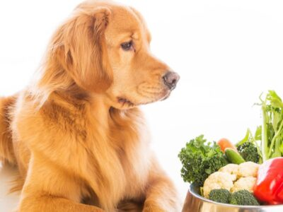 A Best organic dog food: Reviewed for 2021