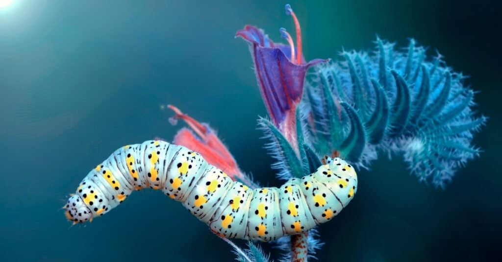 Animals that use mimicry – caterpillar