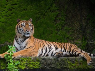A The Top 10 Coolest Animals in the World