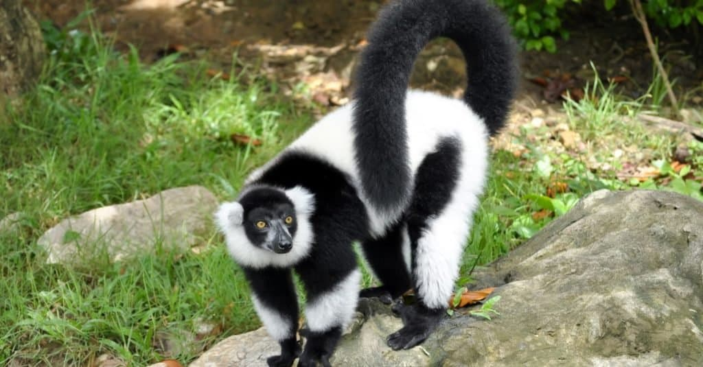 世界十大最灵活的动物!