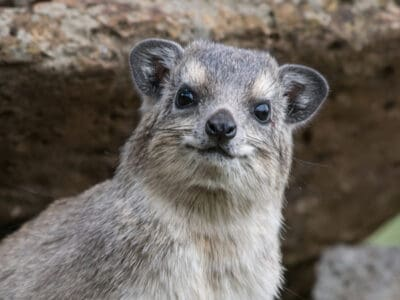 A The 9 Most Interesting Animals in the World