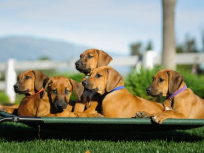 A Best Outdoor Dog Beds: Reviewed for 2021