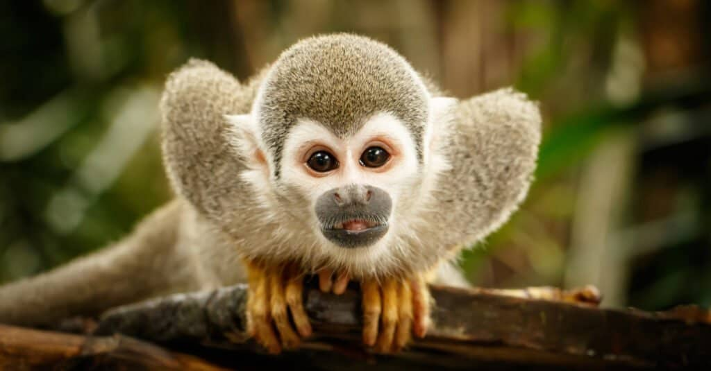 """""""They're as playful as monkeys"""" is one of many common animal analogies."""