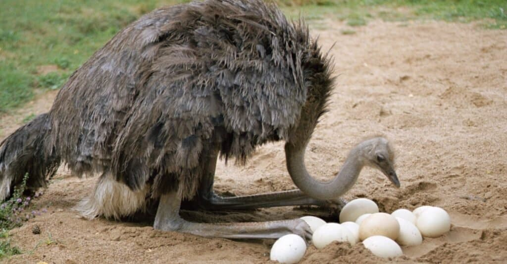 Animals That Lay Eggs