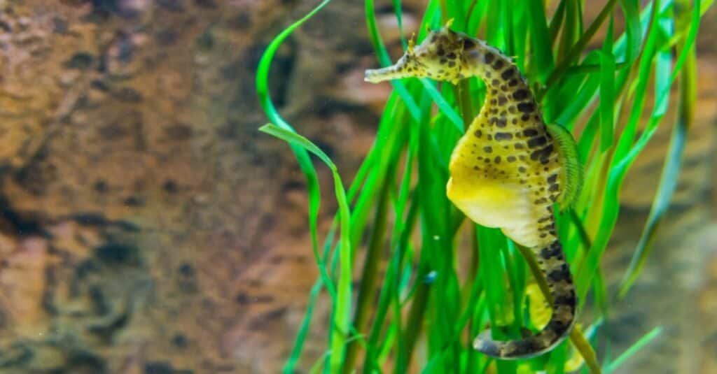 Animals That Lay Eggs: Seahorses