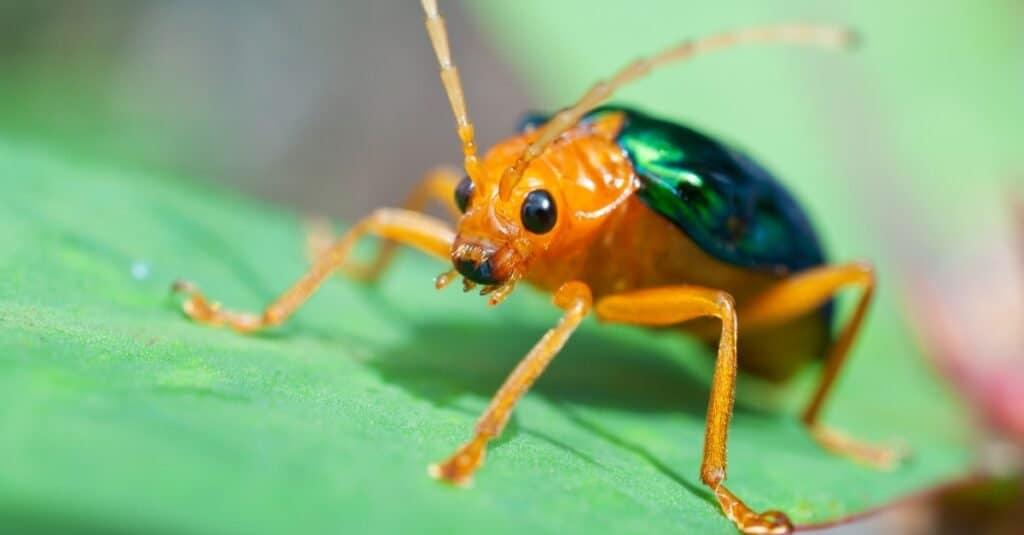 Animals That Spit Acid