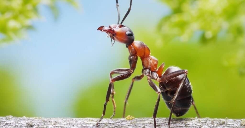 Animals That Spit Acid_ Ants