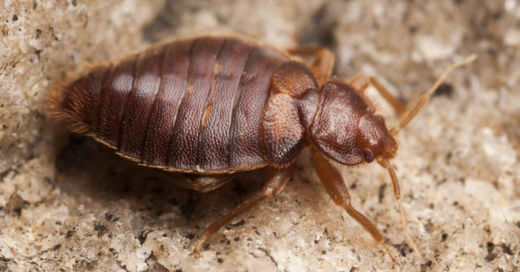 Fear of Animals: Entomophobia
