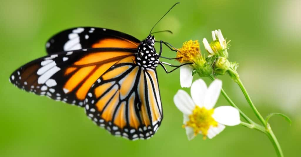 Fear of Animals: Lepidopterophobia