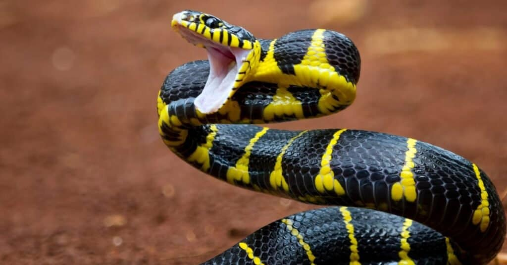 Fear of Animals: Ophidiophobia