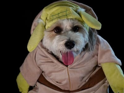 A Star Wars Costumes for Dogs