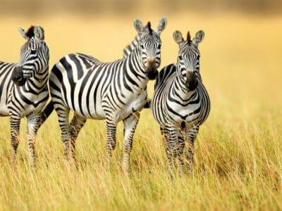 A Groups of Animal Names: The Big List