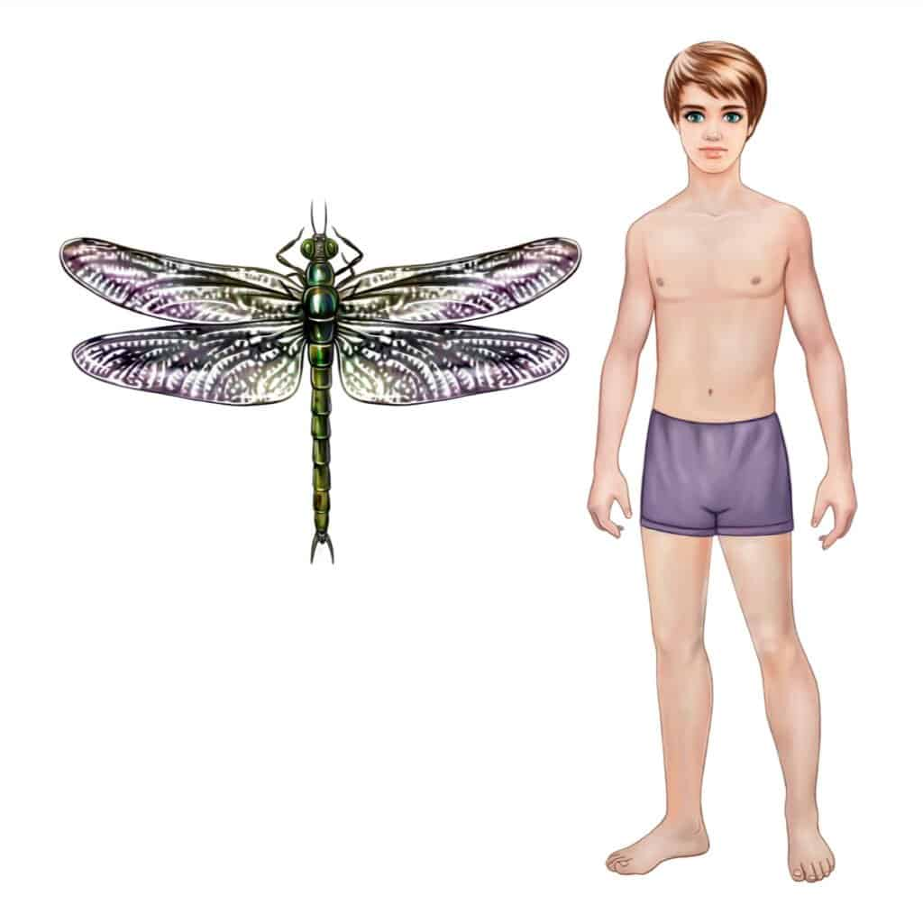 Giant Insects - Ancient Dragonfly