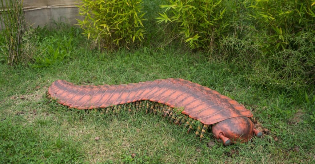 Giant Insects - Arthropleura