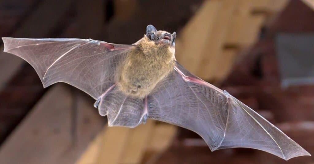 Animals In North America Hibernate