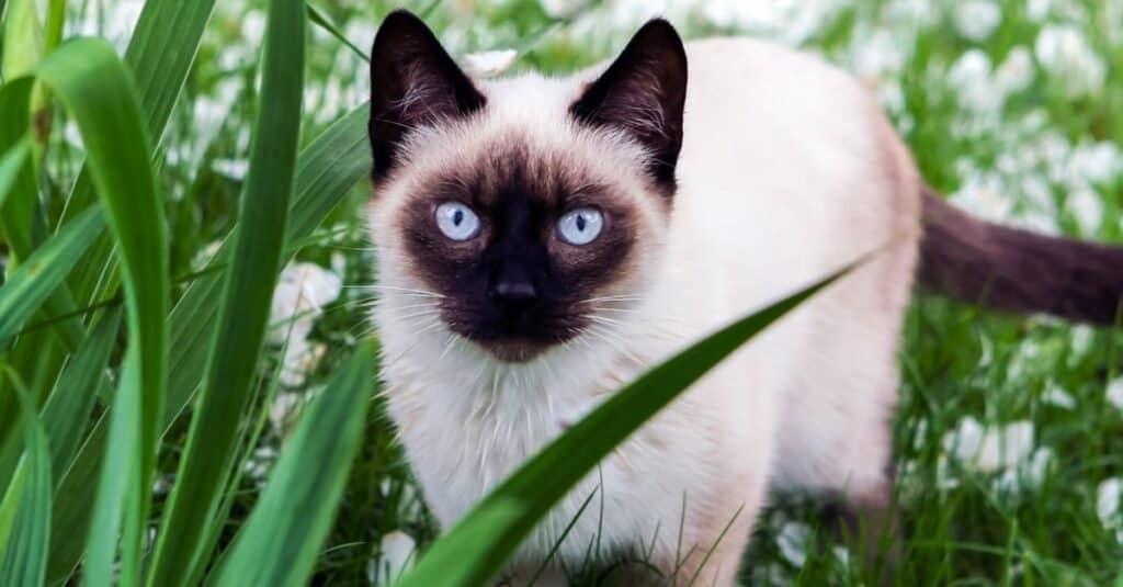 Are Cats Mammals