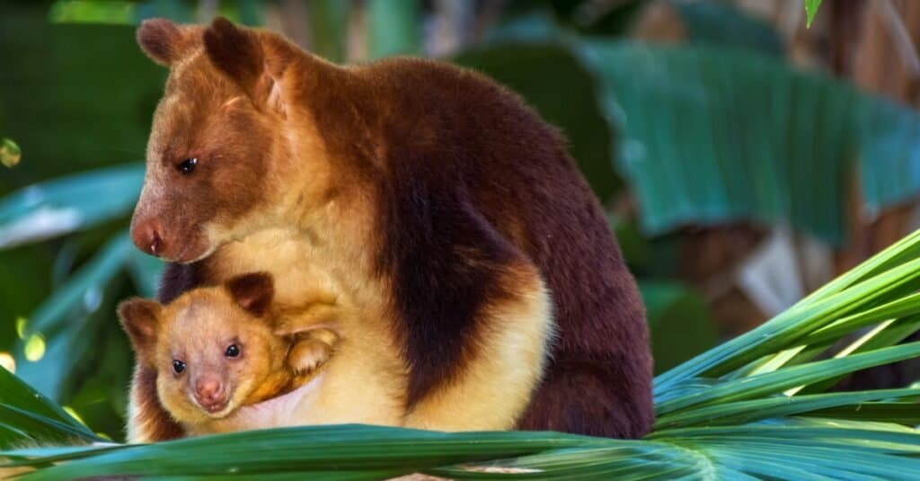 Are Marsupials Mammals