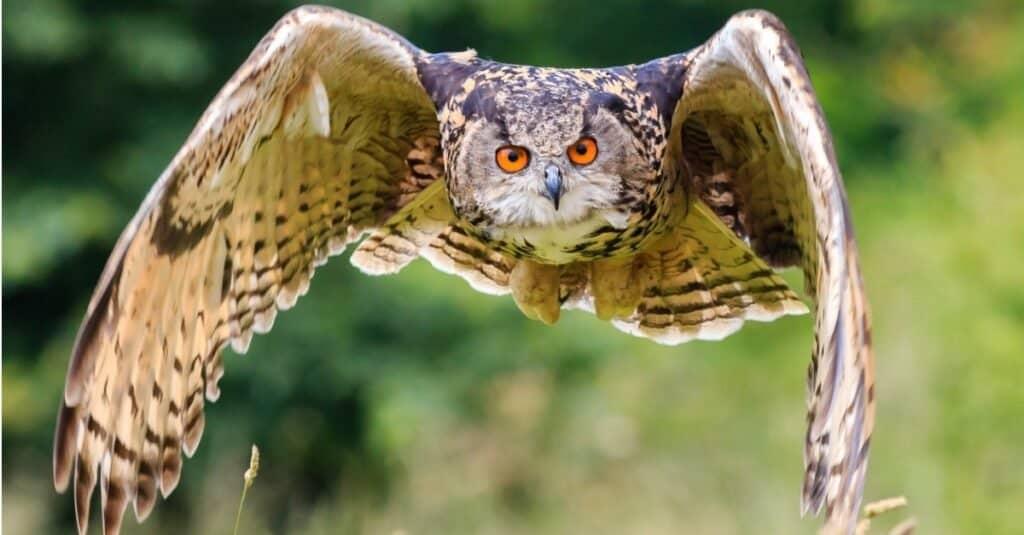 Are Owls Mammals