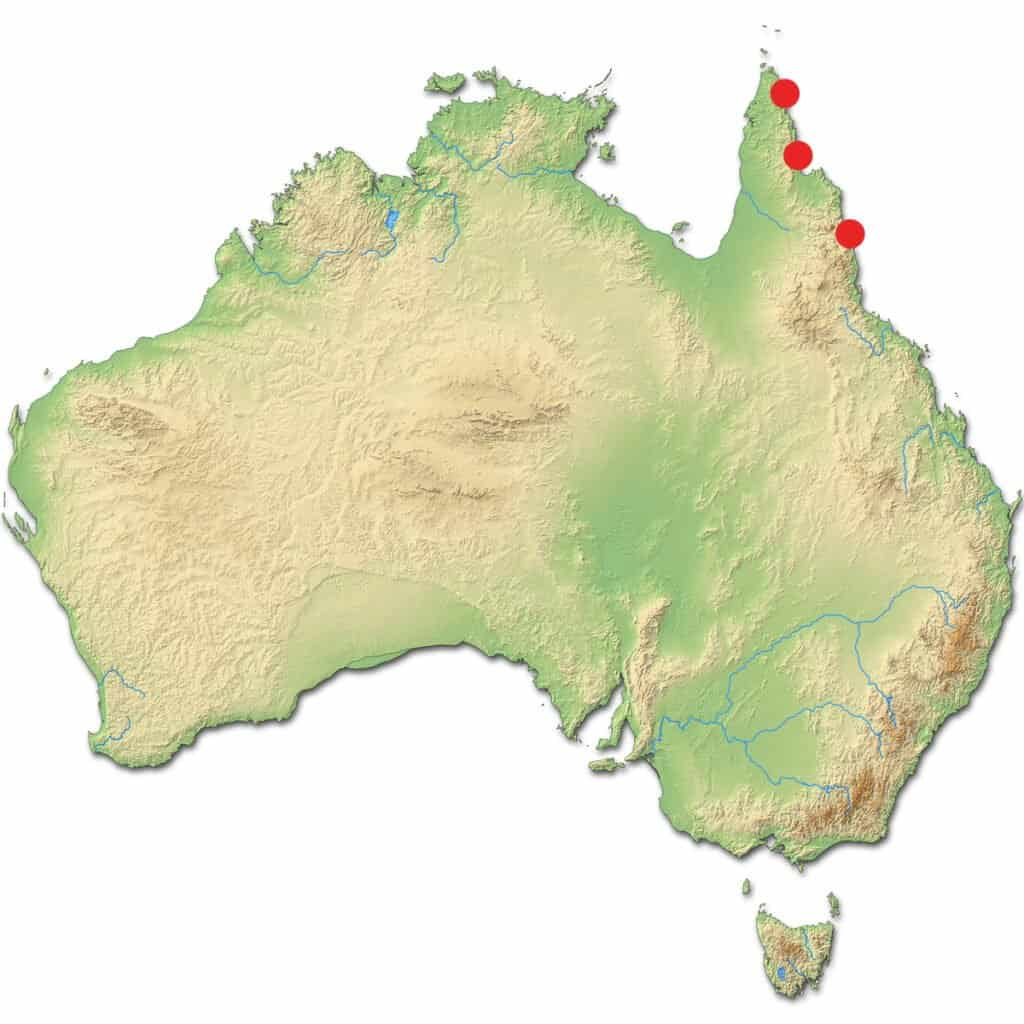 Where Do Cassowaries Live - Australia Locations