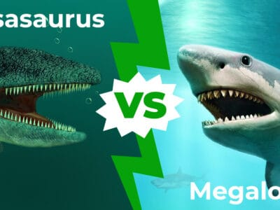 A Mosasaurus vs Megalodon: Who Would Win In A Fight?