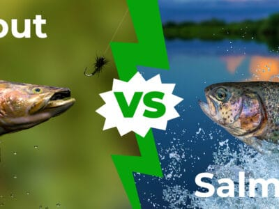 A Trout vs. Salmon: The Key Differences Explained