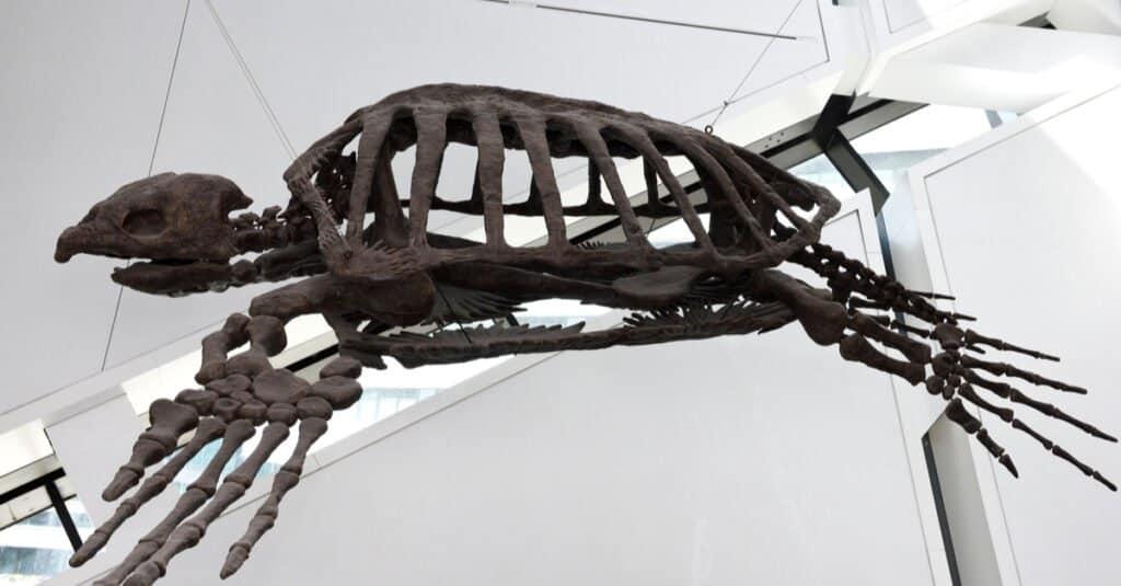 Largest Sea Turtle - Archelon