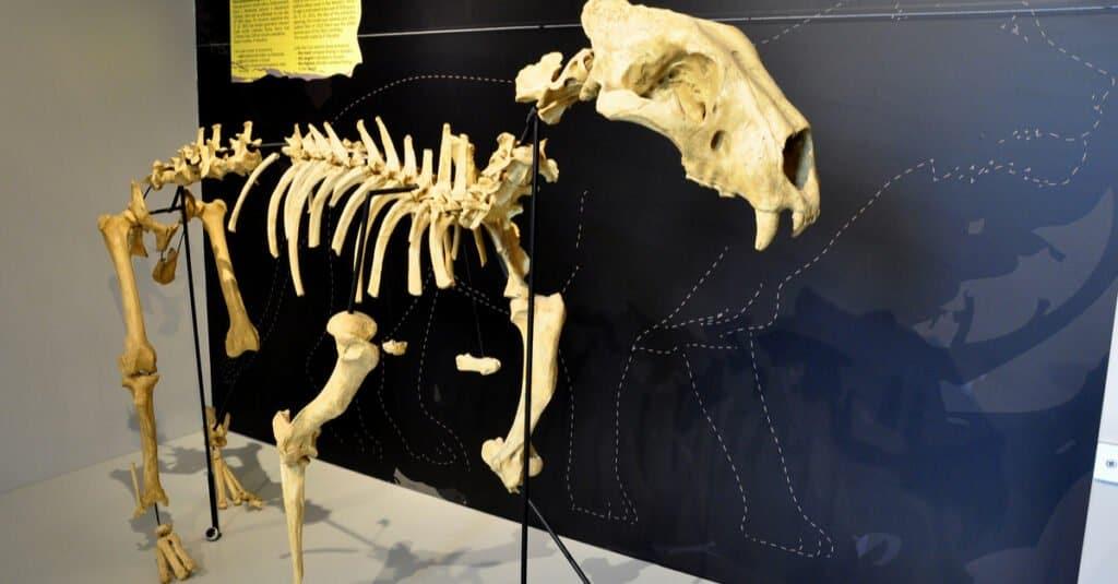 Types of Lion - Cave Lion