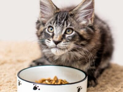 A Best Kitten Food: Reviewed for 2021