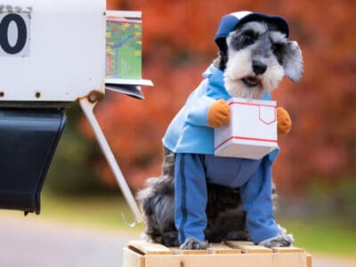 A The Best UPS Carrier Dog Costumes: Reviewed for 2021